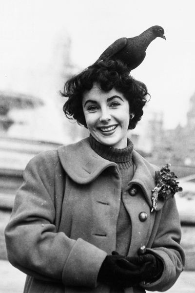 Porno Elizabeth Taylor (1932-1011 (dual citizenship naked (44 images) Gallery, 2016, swimsuit